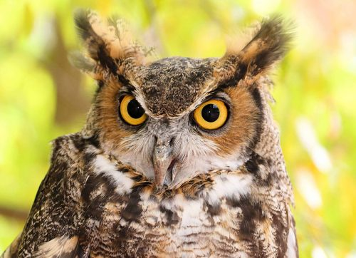 Woodcock Nature Center Hosts Hikes, Hops & Hooty the Owl Fundraiser