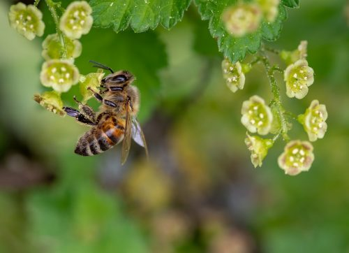 Help Plant a Pollinator Pathway Along the NRVT